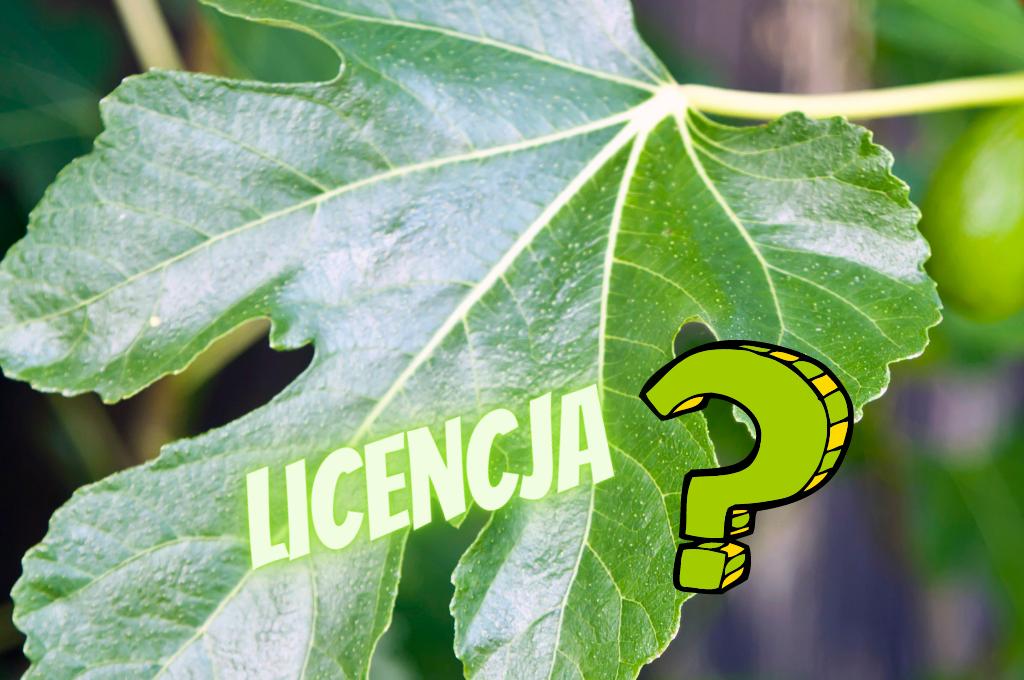 Co łączy licencję przymusową z listkiem figowym?