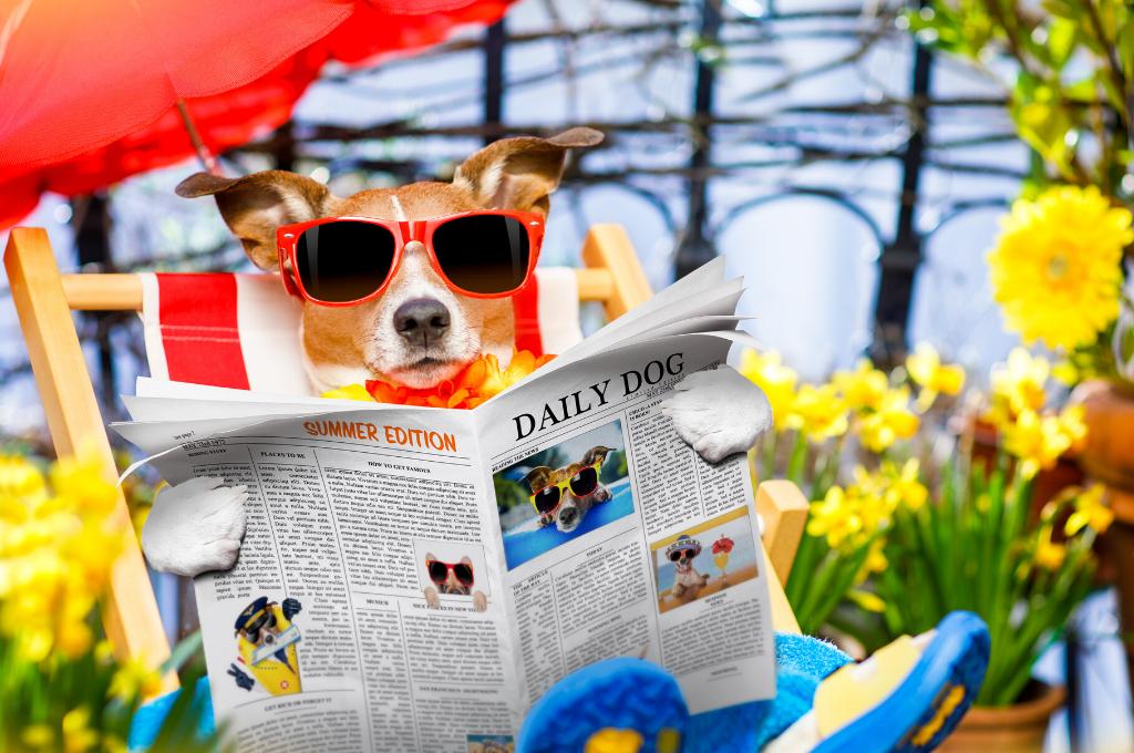 Pies w świecie własności intelektualnej